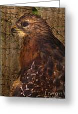 Ponce Inlet Hawk Greeting Card