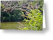 Pond At Norfolk Botanical Garden 12 Greeting Card