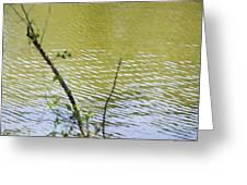 Pond At Norfolk Botanical Garden 8 Greeting Card