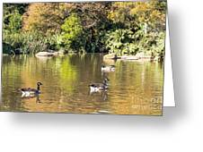 Pond Geese Greeting Card