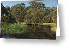 Pond In Park Greeting Card