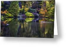 Pond In The Park Oil Paint  2721gop   Greeting Card