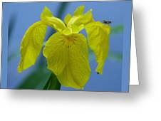 Pond Iris Greeting Card