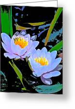 Pond Lily 17 Greeting Card