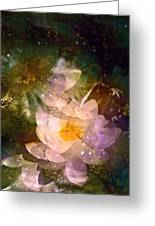 Pond Lily 23 Greeting Card