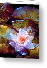 Pond Lily 26 Greeting Card