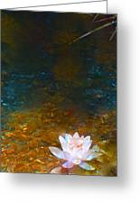 Pond Lily 27 Greeting Card