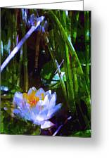 Pond Lily 28 Greeting Card