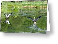 Pond Pairs Dancing Greeting Card