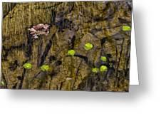 Pond Scene Greeting Card