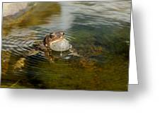Pond Song Greeting Card