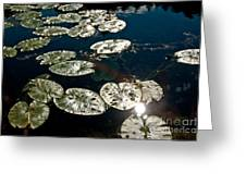 Pond Sunset Greeting Card