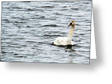 Pond Swan Greeting Card