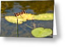 Pond Visitor Greeting Card