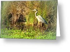 Pond Wildlife Greeting Card