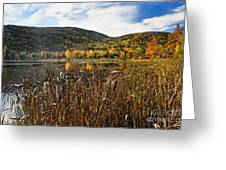 Pond With Autumn Foliage  Greeting Card