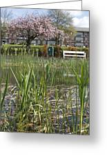 Pond With Reed Greeting Card