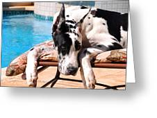 Pondering Poolside Greeting Card