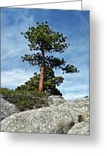 Ponderosa Pine And Granite Boulders Greeting Card