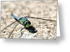 Pondhawk Upclose Greeting Card