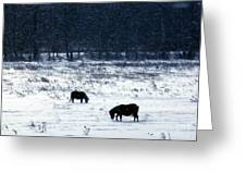 Ponies In The Snow Greeting Card