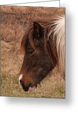 Pony Head Greeting Card