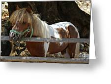 Pony Horse Greeting Card