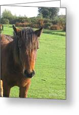 Pony On The Moors Greeting Card