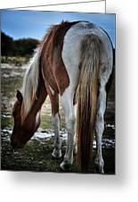 Pony Tail Greeting Card