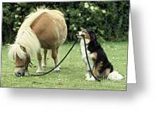 Pony With Lead Rope Held By Sitting Dog Greeting Card