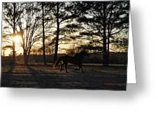 Pony's Evening Pasture Trot Greeting Card