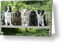 Poodles And Other Dogs On A Bench Greeting Card
