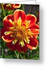 Pooh Dahlia Flower Greeting Card