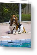 Pool Side Basset Greeting Card