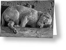 Pooped Puppy Bw Greeting Card