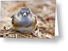 Poor Little Birdie Greeting Card