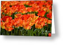 Pop Of Color Greeting Card