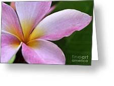 Pop Of Pink Plumeria Greeting Card