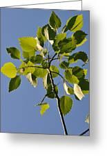 Poplar Leaves Greeting Card