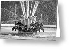 Popp Fountain In City Park Bw Greeting Card