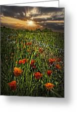Poppies Art Greeting Card