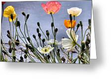 Poppies Greeting Card by Dana Patterson