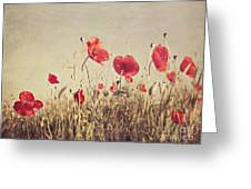 Poppies Greeting Card by Diana Kraleva