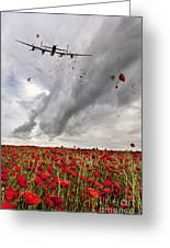Poppies Dropped  Greeting Card