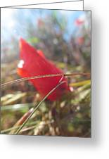 Poppies Dying Greeting Card