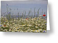Poppies Et Al V Greeting Card