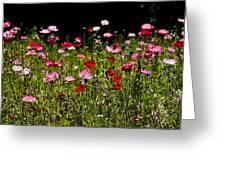 Poppies Gettin Sun Greeting Card