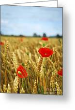 Poppies In Grain Field Greeting Card