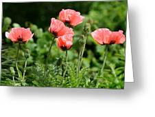 Poppies In My Garden Greeting Card