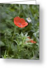 Poppies In Park In Arnhem Netherlands Greeting Card